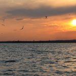 Táboroztass a Velencei-tónál!