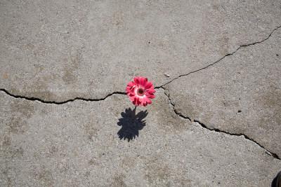 flower struggles to survive